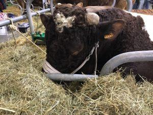 絶対心が優しい牛。